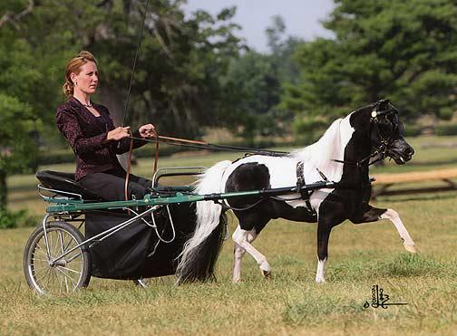Koetsier teugels pony